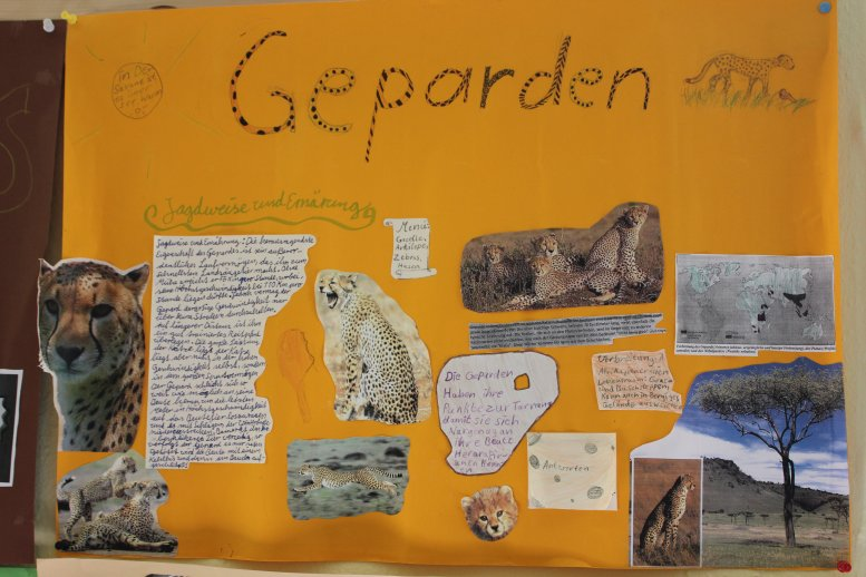 Kinderplakat_Geparden